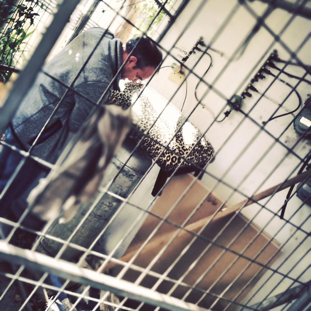 מי בכלוב? אני או הנמר?