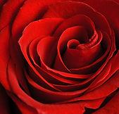 flowers0082.jpg