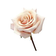 mother-pearl-peach-roses.jpg