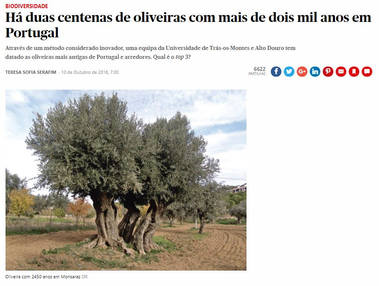 2000 years old trees - Portugal