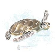 Sealife Illustrations
