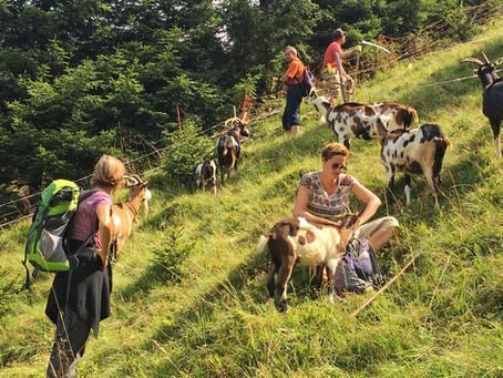 Wir wollen auch 2019 wieder Bergmähder als Oasen für Pflanzen und Tiere erhalten.