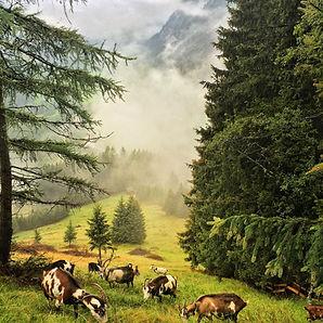 Das Paradies der Ziegen: Ocherloch