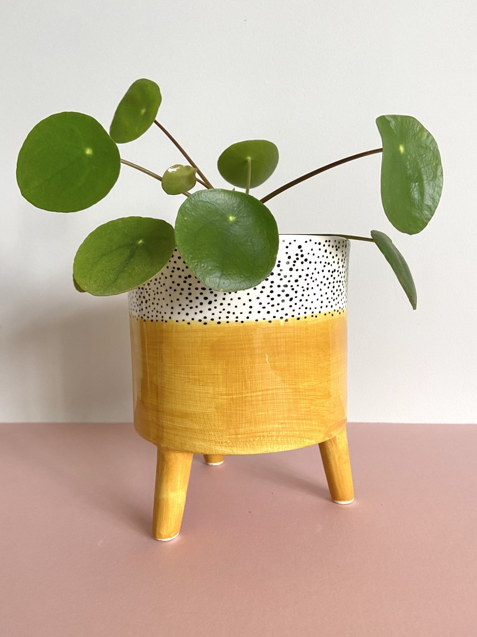 Little Wild Things Little Wild Things is an online botanical emporium that specialises in carefully selected houseplants and contemporary botanical displays for your home.  Combining nature and interior design, they offer houseplants, Kokedama, Terrariums, pots, hangers, dried flowers and more.