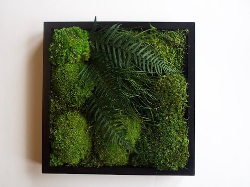Black Frame Moss Art