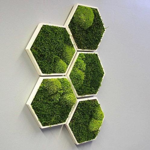 Moss Only Hexagon
