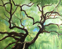 Angel Oak