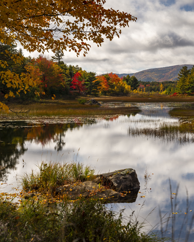 Duck Brook Acadia