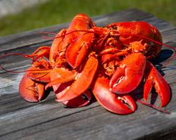 Lobster Bake 4