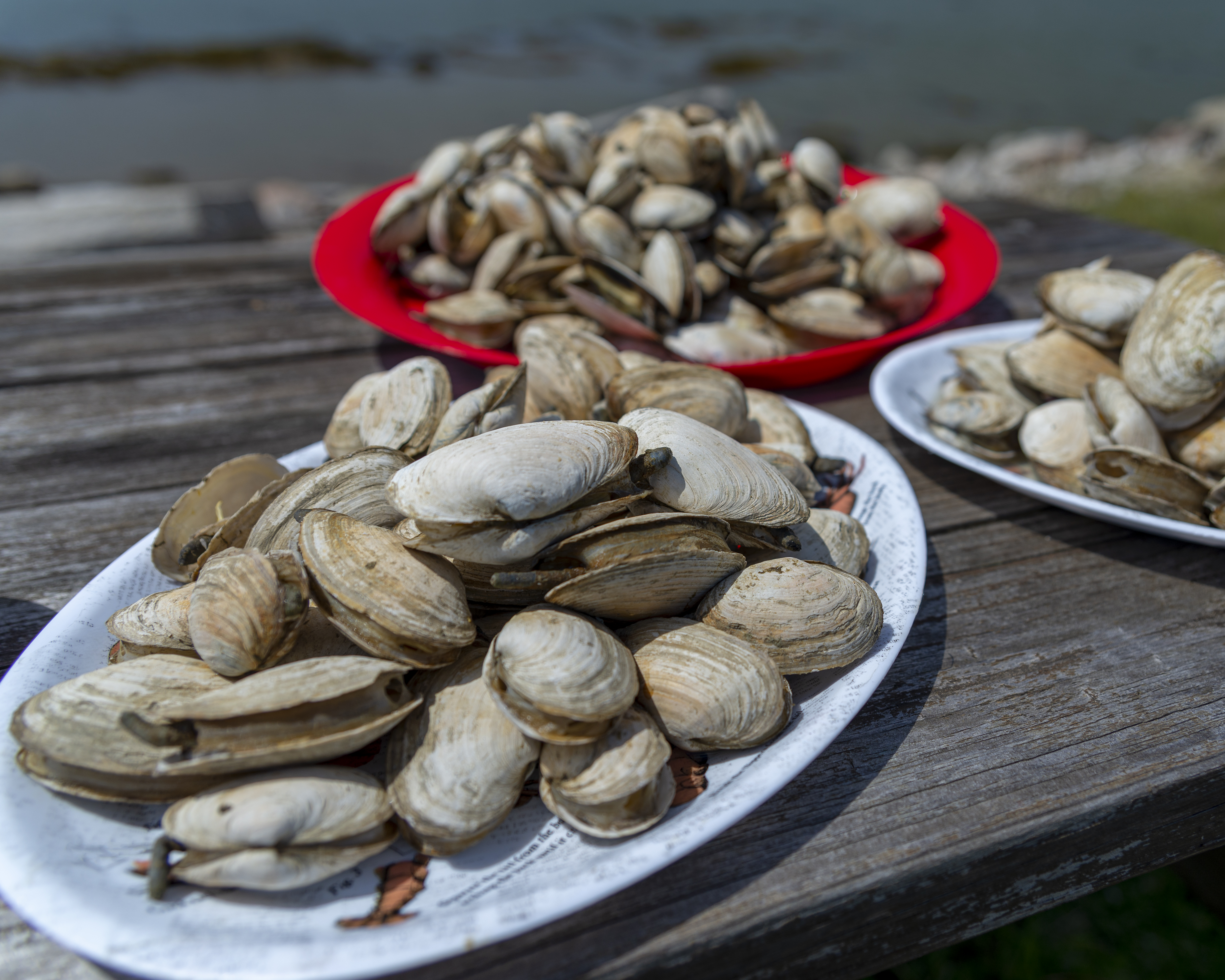 Steamers 1