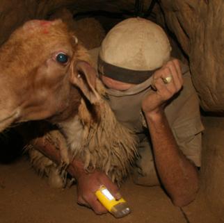 animal smuggling.png