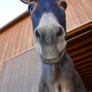 gaza CU donkey.png