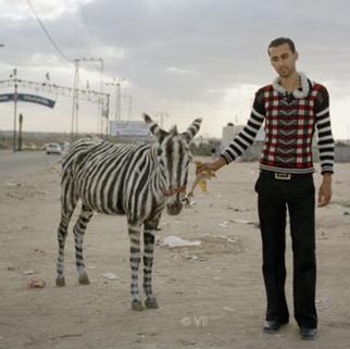 gaza donkey.png