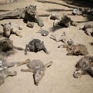 Dead_animals_Gaza_Zoo.png