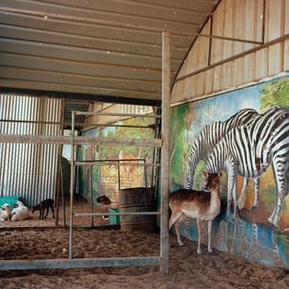 deer by mural.png