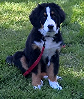 """Ally in the front yard   """"Good Dog"""" 5-7-19"""
