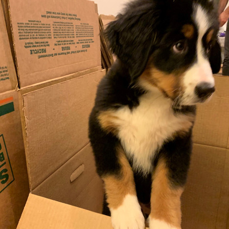 Hapoo packing to move @ 12 weeks old