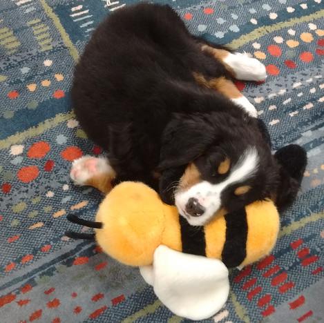 Django with  Bee napping