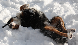 Boomer... Snow Angel.png