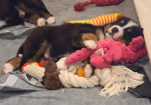 Sleeping Zeus...