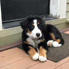 Bernie 5-5-19 on porch with his stick
