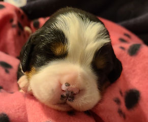 Pink Girl #3... 10 days old 2021-06-13_2