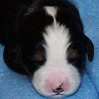 Black Dog #1-B- cropped  2-6-19.jpg
