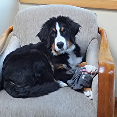 Django in Moms chair 6-24-19 at 59lbs.