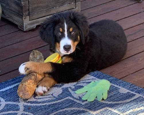 Darby with some of his fav toys... 8-29-21