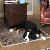 Murphy at home 5-25-2019