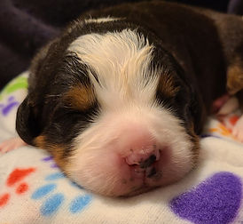 Orange Boy#9... 10 days old...eyes openi