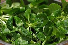 salad-3946916_640.jpg