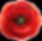 Poppy_Transparent_PNG_Clip_Art_Image.png