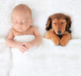 Sleeping newborn baby alongside a dachsh