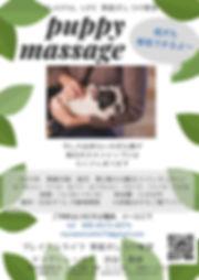 puppy massage.jpg