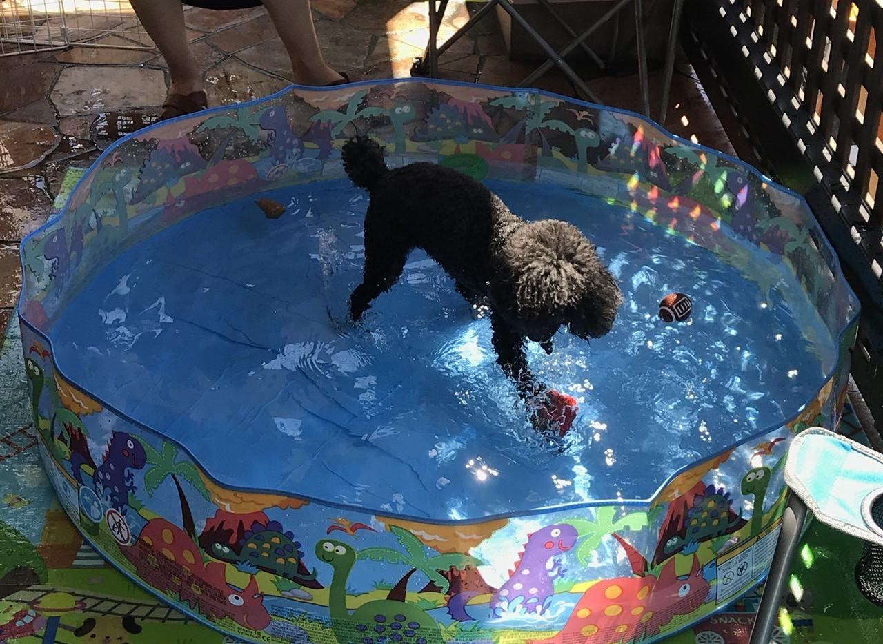 水中のコングで遊ぶりくちゃん