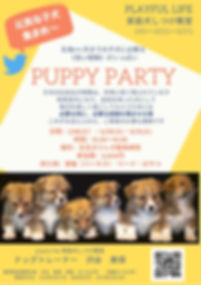 puppy party202001-03.jpg