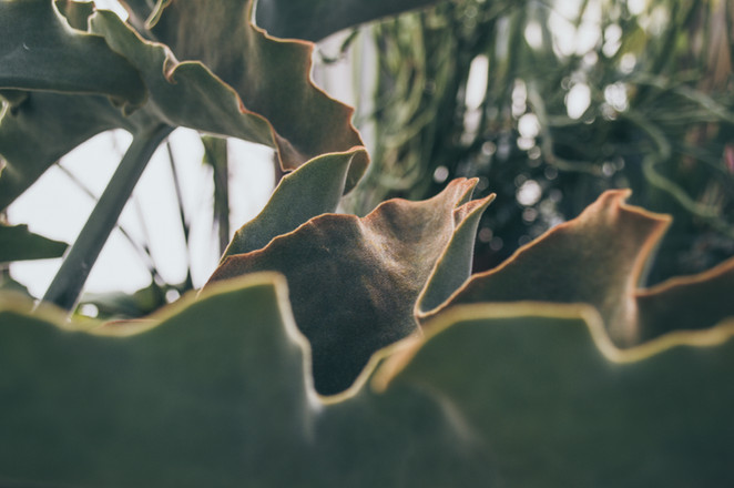 nature detail