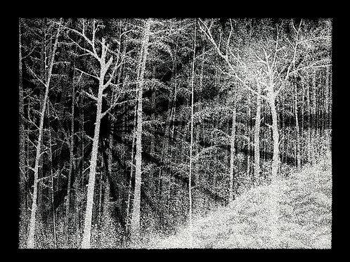 It's the Light (prints)