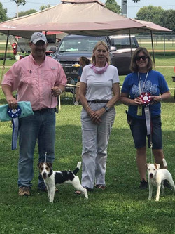 River Bottom Gage received Reserve  Best 6-12 puppy dog and Reserve Puppy Conformation today!  Love