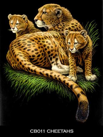 Cheetahs+copy.jpg
