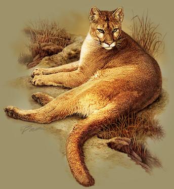 cougar+web.jpg