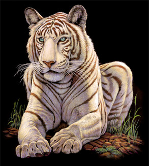 OC071 White Tiger