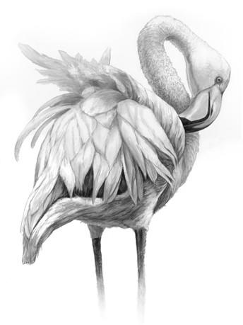 Cliffs+Flamingo+copy.jpg