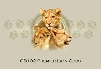 Premier Lion Cubs