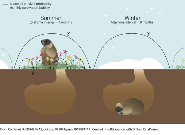 marmot_schematic_edited.png