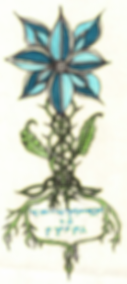 BlueRose2.PNG