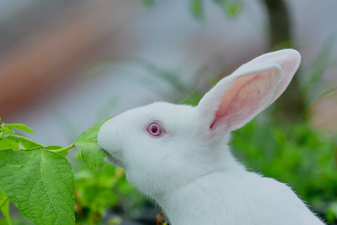 cute expressions of white rabbits or new