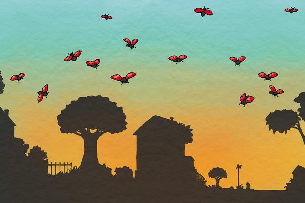 Sunset & Ladybugs