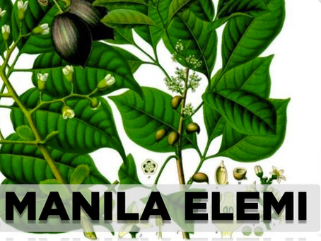 Manila Elemi: A prized ingredient in the skincare industry